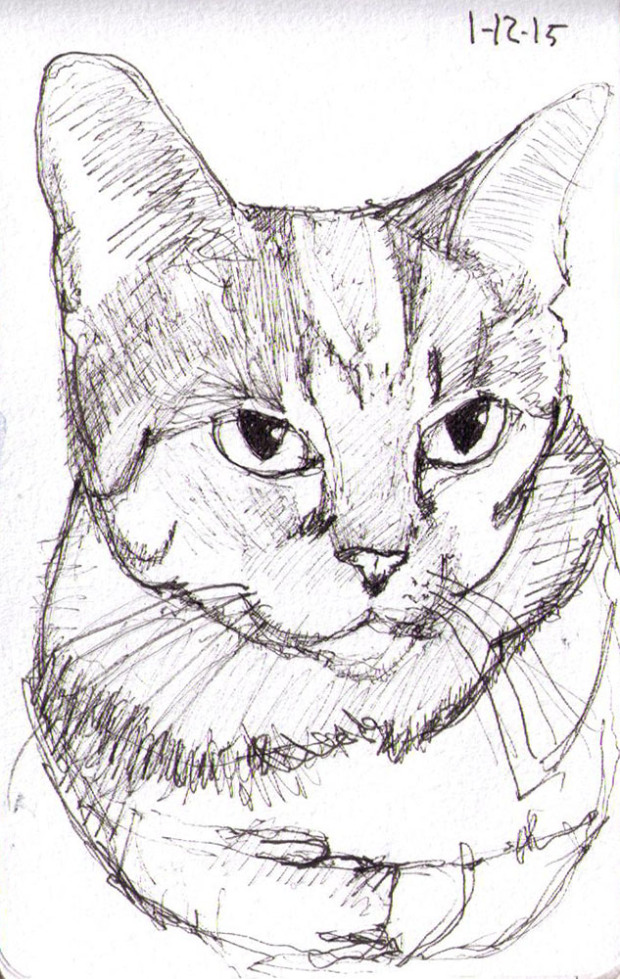 Pen sketch of LExi the Service cat
