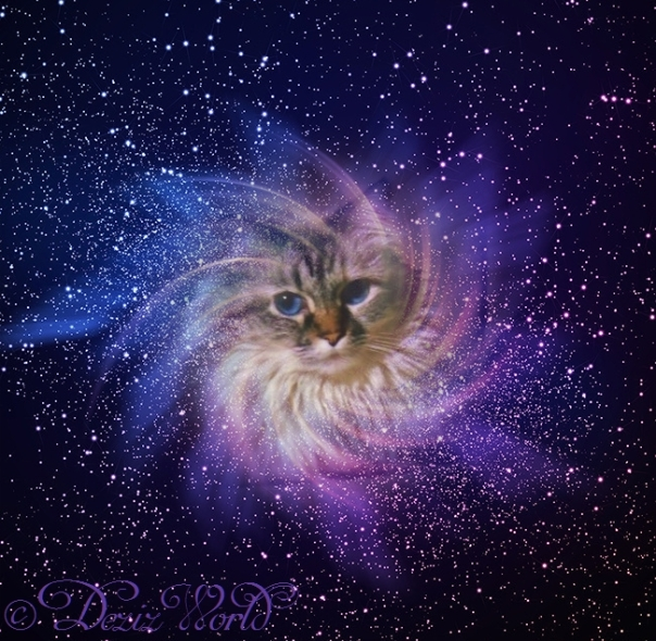 Dezi in her signature purple nebula