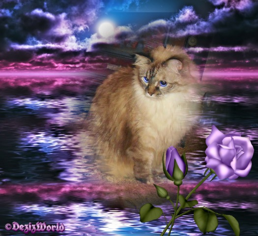 Dezi among shades of purple stormy skies and purple rose