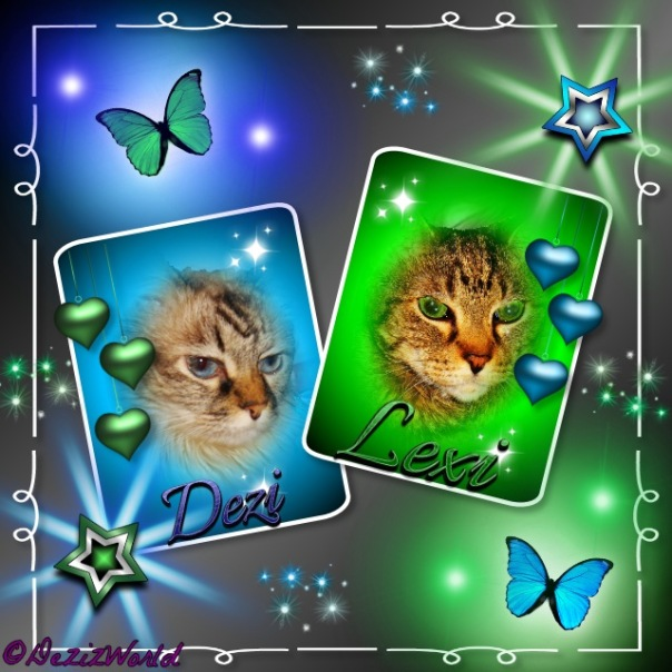 Dezi in blue frame with green butterflies and Lexi in green frame with blue butterflies