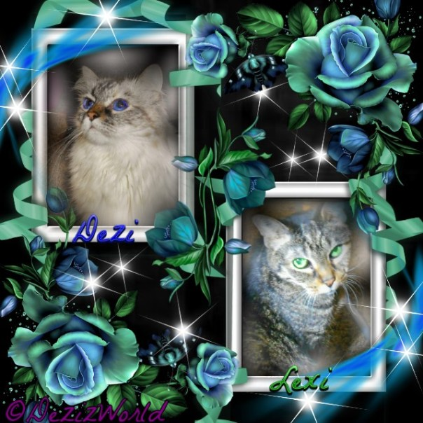 Dezi and Lexi in blue frames with blue roses