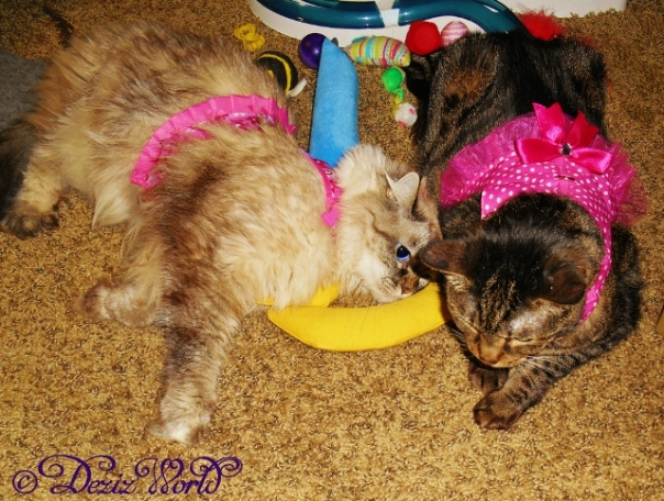 Dezi and Lexi in their harness dresses laying together