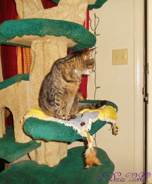 Lexi looks out the door from the Liberty cat tree 1-29-16