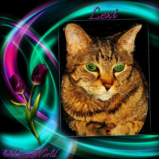 Starry eyed Lexi in a multicolor frame of pinks, purples an turquoise.