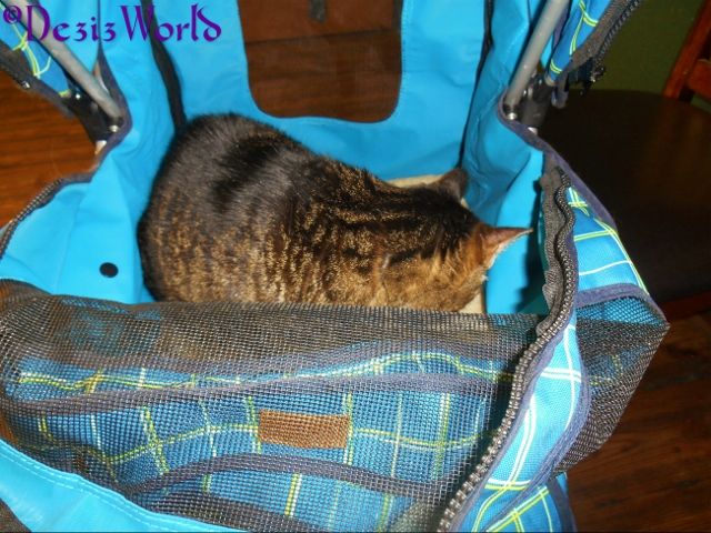 Lexi takes a nap in the stroller at the Vets