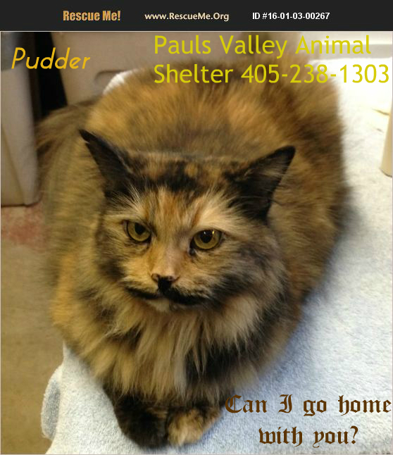 Pudder from the Pauls Valley Animal Shelter in Oklahoma