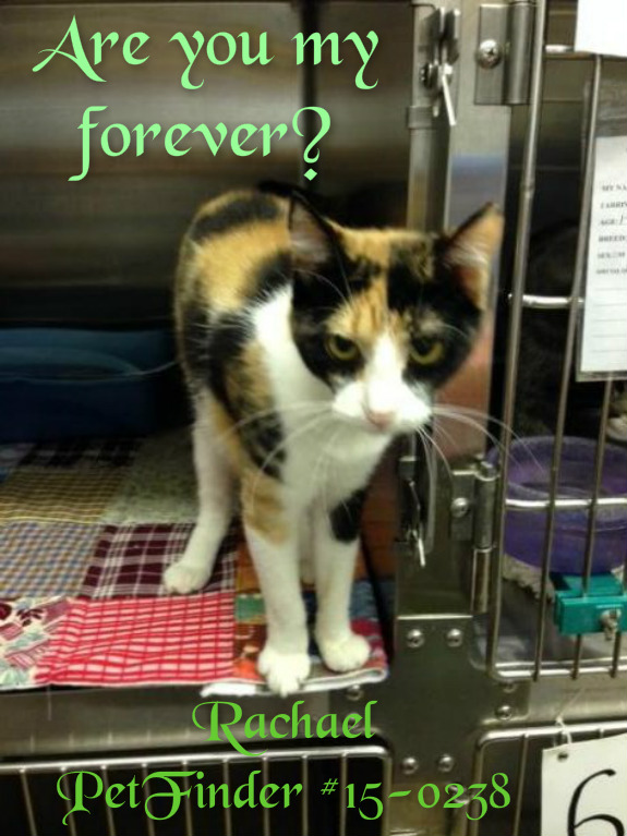 Rachael at the Pauls Valley Shelter waiting for adoption