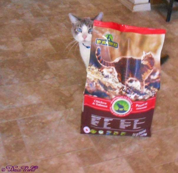 Buddy poses with the Holistic Blend cat food bag