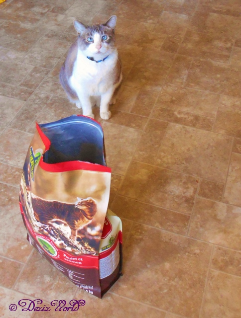 Buddy waits for a bite from the open Holistic Blend cat food bag