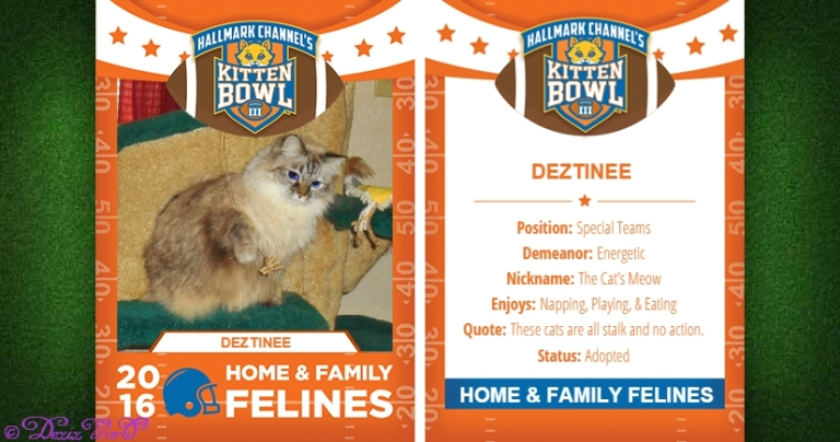Dezi in Hallmark Kitten bowl playing card