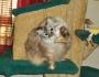 Cat Dancing: Keeping KittyOccupied