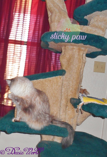 Dezi plays with the Cat Dancer on the Liberty cat tree and shows off the Sticky paw