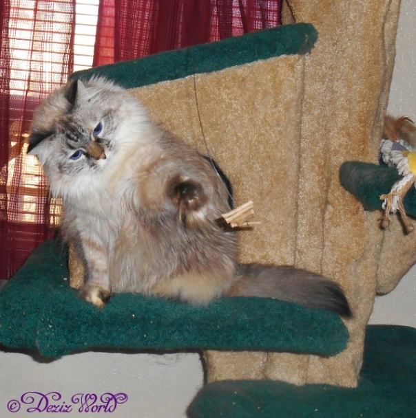 Dezi stretches non nonchalantly at the Cat Dancer