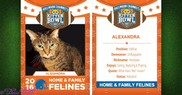 Lexi in Hallmark kitten bowl playing card