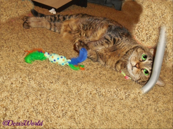 Lexi lays on the floor playing with a new nip toy 2-24-16