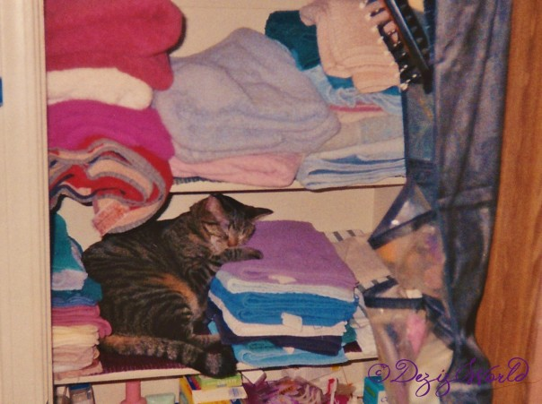 2 year old Lexi napping in the towel closet