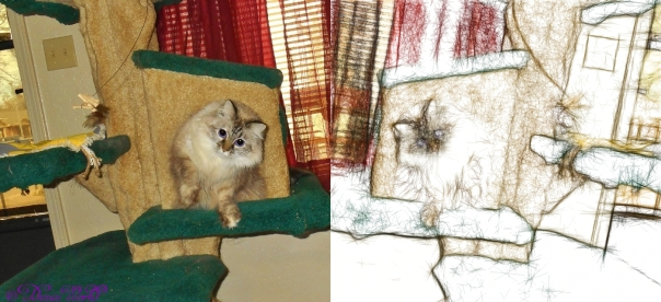 Dezi on cat tree playing mirrored in artist pencil sketch