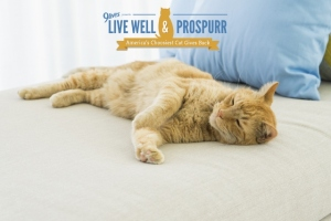 Morris Live Well and Prospurr Campaign photo