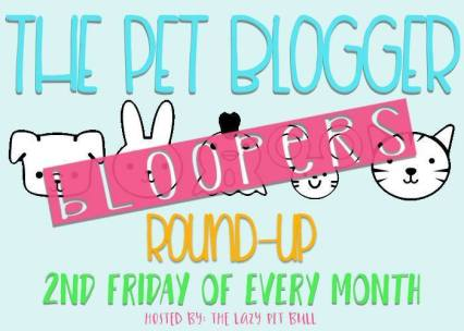 PetBloggerBloopersRoundup