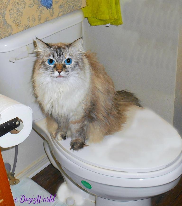 Dezi sitting on the toilet