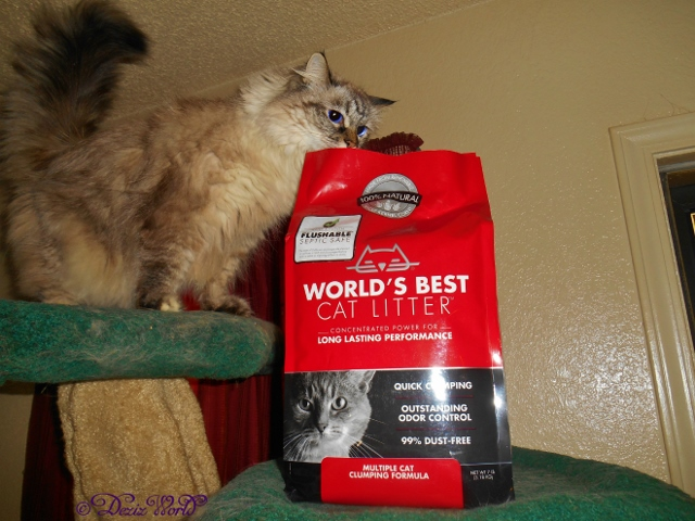 Dezi looking in the World's Best Cat litter bag