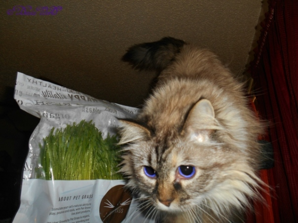 Dezi close up with the Pet Grass