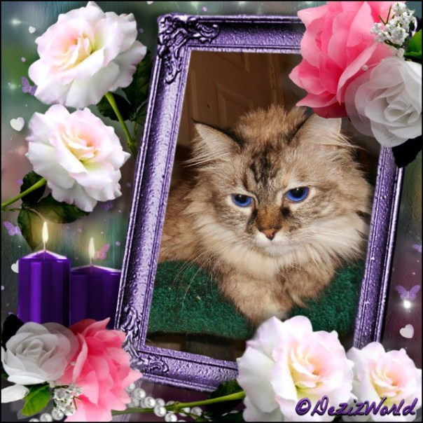 Dezi in a frame with cream and pink roses
