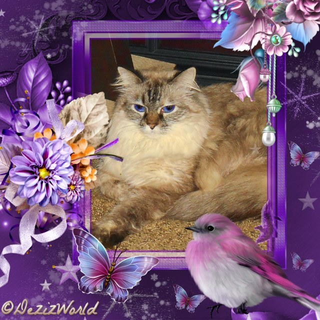 Dezi sitting in a purple frame with flowers, butterflies and a bird.