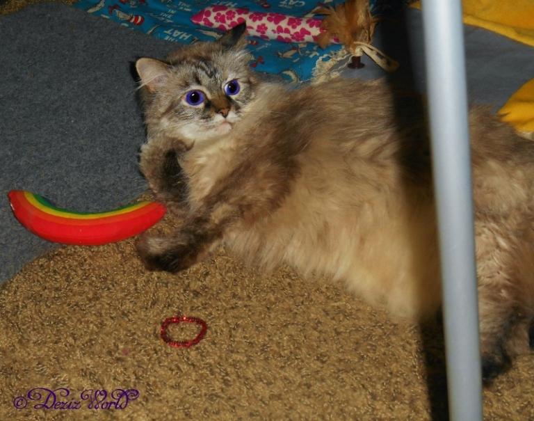 Dezi lays on the floor with her Yeowww nip rainbow