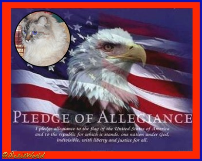 Dezi with the U.S. flag and Bald Eagle with the Pledge of Allegience