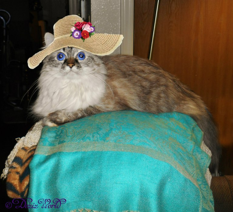 Dezi on the back of the chair in a straw hat