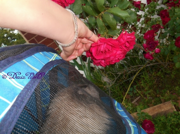 Dezi in stroller smelling the roses