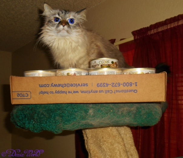 Dezi with case of Wellness Core Cat food