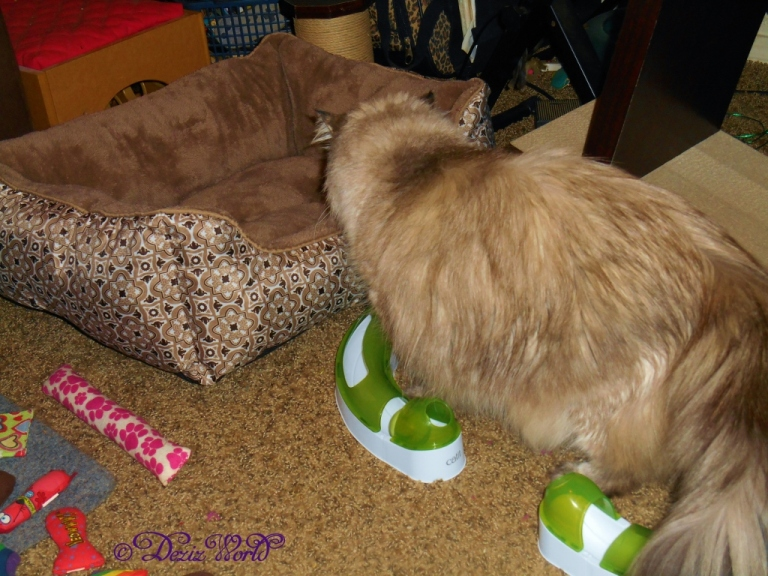Dezi checks out new cat bed