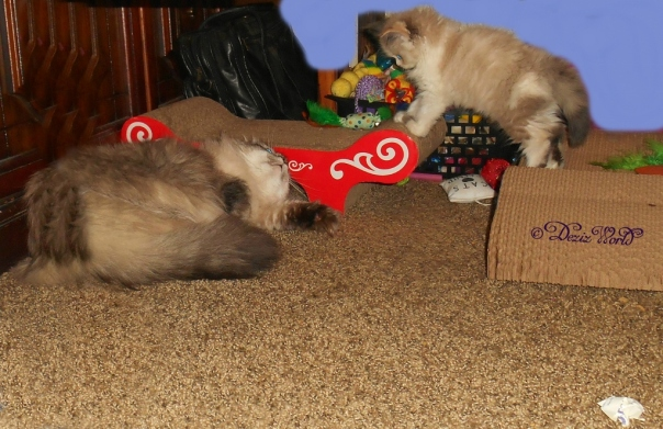 Dezi prepares for attack while Raena hovers between scratchers