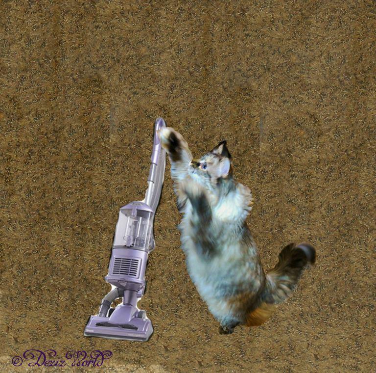 Dezi uses the Shark vacuum