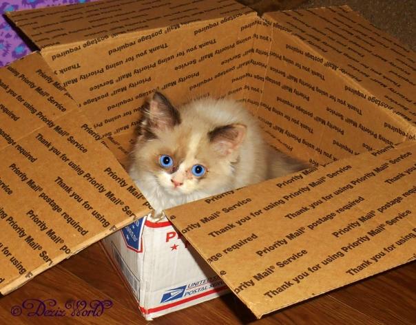 Raena enjoys her first box