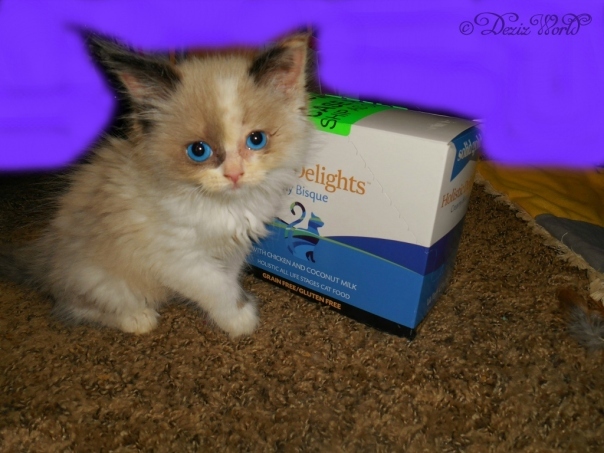 Raena poses with Holistic Delights Creamy Bisque cat food