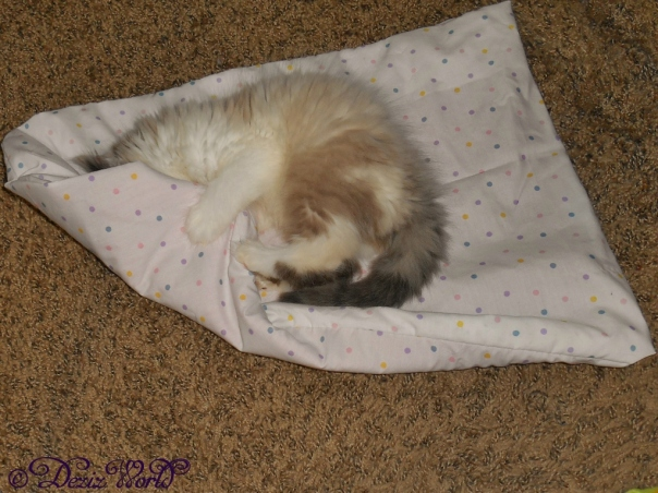 Raena rolls around in her catnip mat