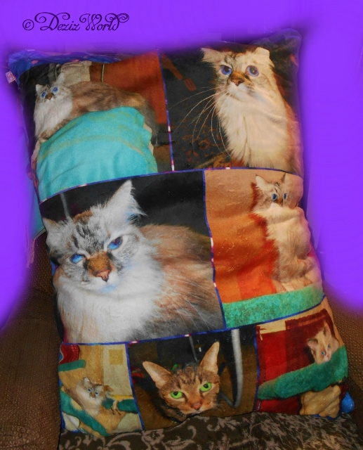 Pillow Pet Bed from collage.com customized with photos of Dezi, Lexi and raena