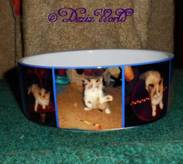 photo ceramic cat bowl from collage.com