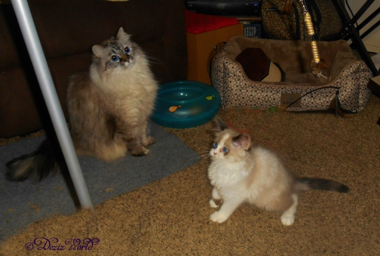 Dezi and Raena play with the fly toy
