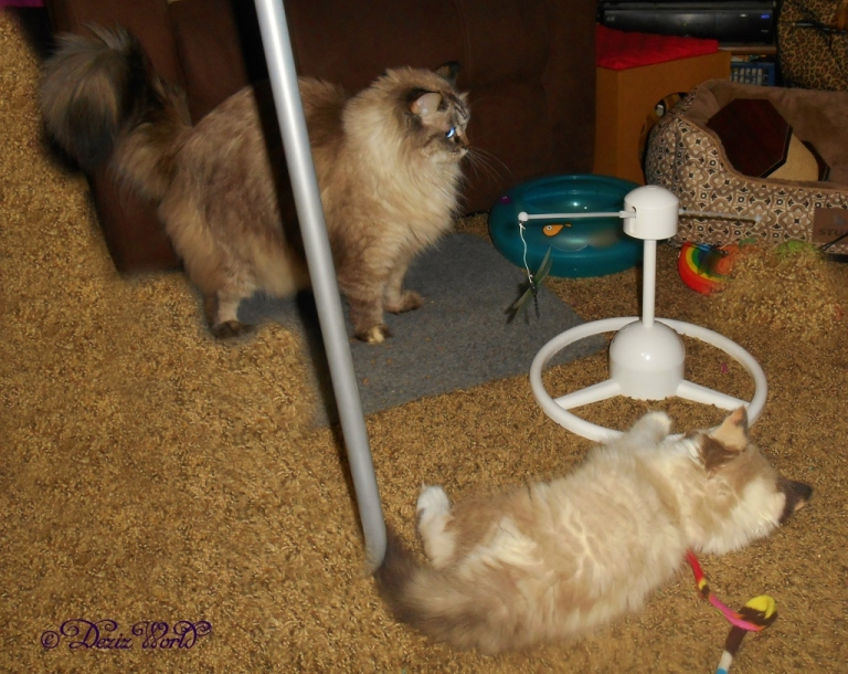 Dezi and Raena play with the PetSafe Flitter