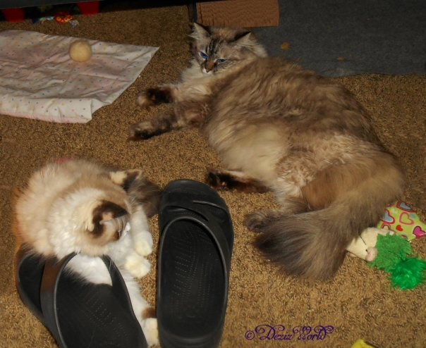 Dezi and Raena laying at mommy's feet
