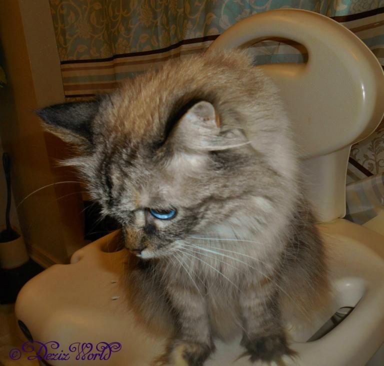 Dezi on shower chair