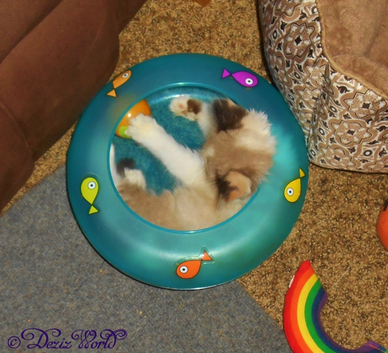 Raena inside fish bowl toy
