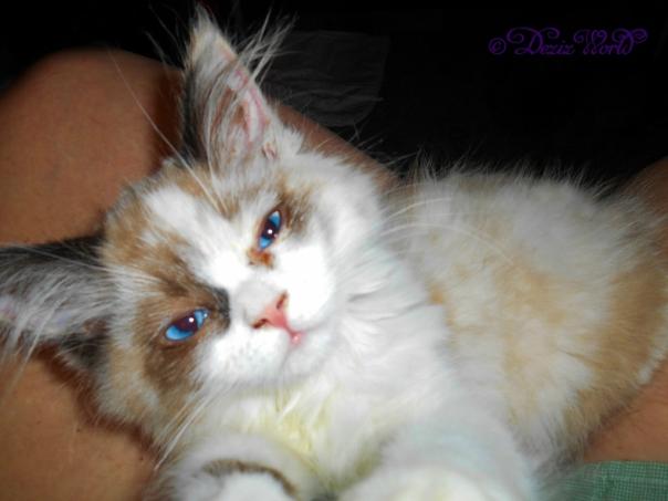 Raena's sleepy lap selfie