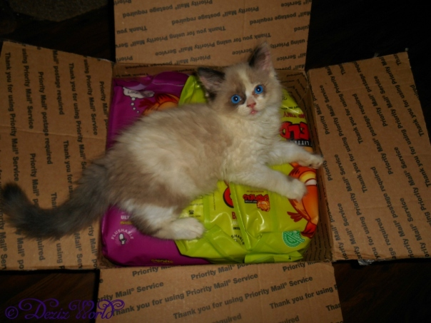 Raena laying on the Garfield Cat litter in box
