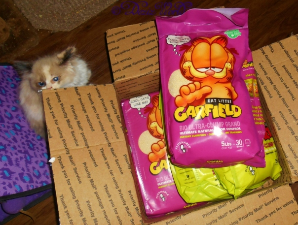 Raena looking at the Garfield Cat litter