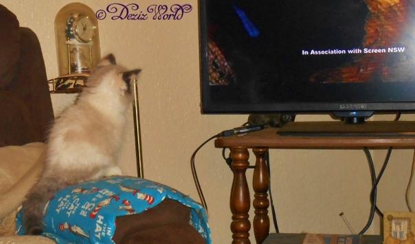 Raena watches teevee